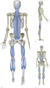 Superficial back line myofascial meridian
